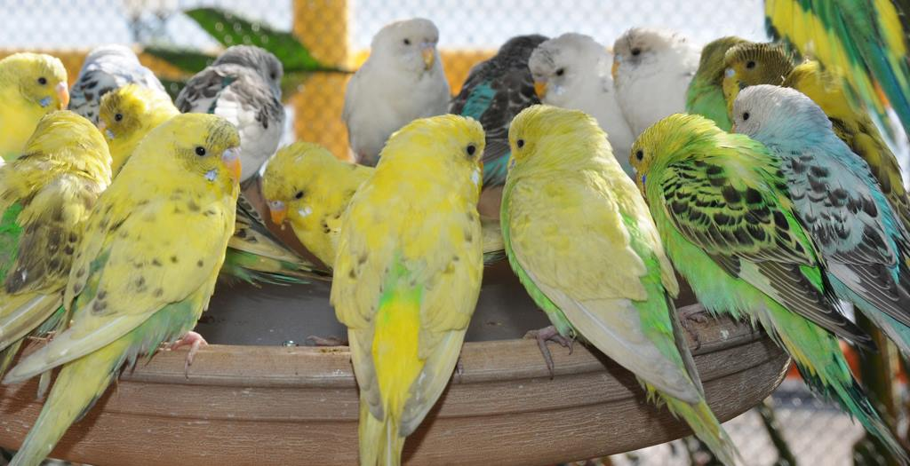 volvo-parakeets